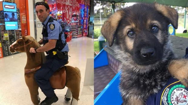 (Cockburn Police and NSW Police/Twitter)