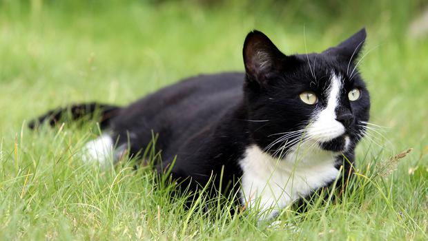 The number of animals killed each year by domestic cats in the UK runs into the millions, researchers claimed