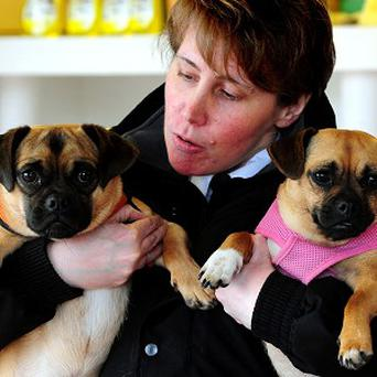 Deputy Chief Inspector Jayne Bashford with pug crosses Ringsby and Betty