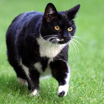 Holyrood will not be getting a resident feline like Sybil, the cat at 10 Downing Street