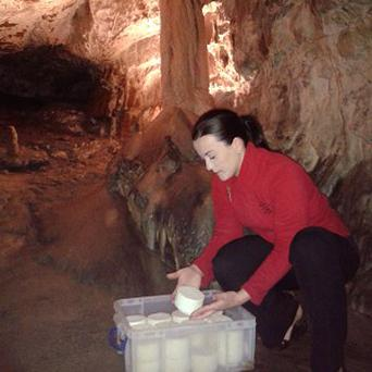 Jay Thomas, catering director of the cave complex, checks the cheese in Angel Passage at Dan Yr Ogof, South Wales