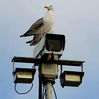 Postal workers are refusing to deliver mail to a street in case they are attacked by gulls