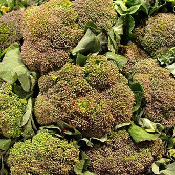 Beneforte was created using conventional breeding techniques by crossing conventional broccoli with a wild Italian variety
