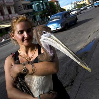 Magela Guerrero pictured with Pancho the pelican in Havana. (AP)