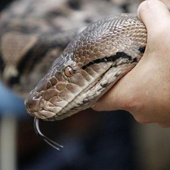 A woman was apparently bitten by a python as she took a short cut on her way home from the pub