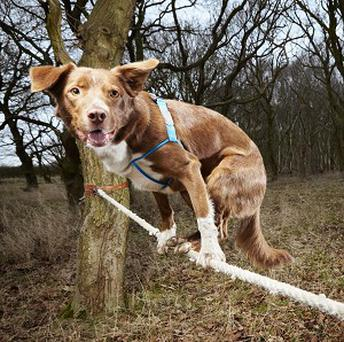 Ozzy has made it into the Guinness Book of World Records for the fastest crossing of a tightrope by a dog (Guinness World Records/PA)