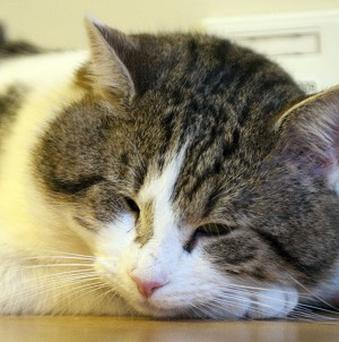 Larry was re-homed at Number 10 on February 15 2011 by animal charity Battersea Dogs And Cats Home