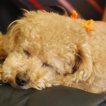 Taking care of an elderly dog is fraught with emotional challenges