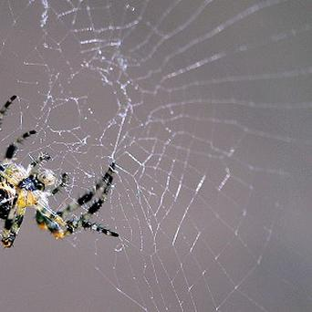 Animals and creepy crawlies feature prominently in a list of weird 999 calls, including a spider crawling on a pillow