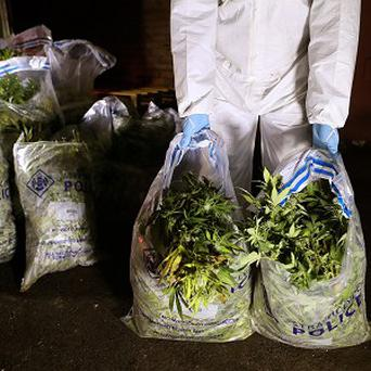 Bags of cannabis seized in a drugs raid were reportedly left in a hire van used by police