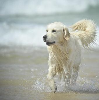 Research suggests that when dogs wag their tails to the left they are fearful but when they wag their tails to the right they are relaxed