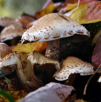 Mushrooms are able to disperse their spores over a wide area even when there is no wind by creating their own weather, scientists say