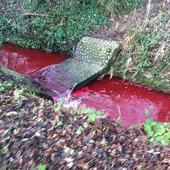 A bubbling brook which turned blood red last week and left residents puzzled.