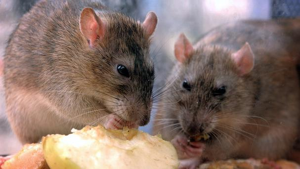 As a row over a man escalated a group of women dumped rats into the home of a rival