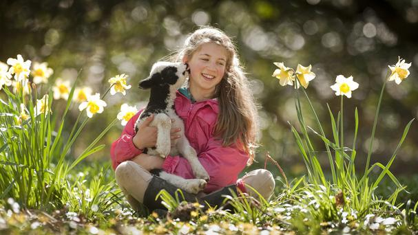 Verity Sharpe, 13, with Terence the lamb at the National Trust's Arlington Court property in Devon. (Steven Haywood/National Trust/PA)