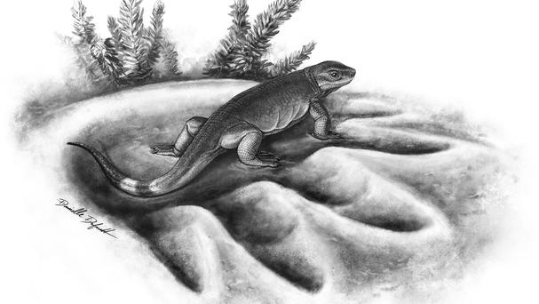 An artist's impression of tiny mammal ancestor Eocasea in the footprint of its much larger herbivorous descendent Cotylorhynchus (University of Toronto/PA)