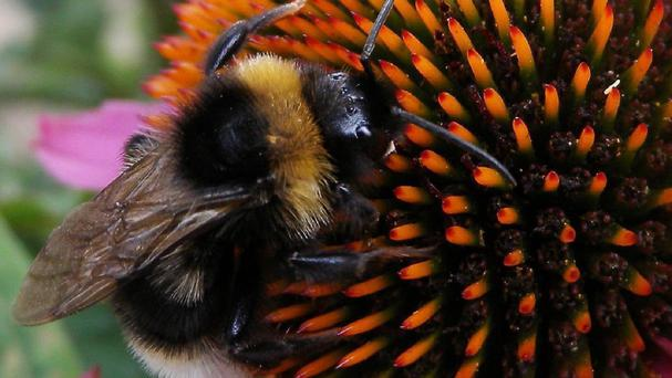 The insects in the latest incident were taken from a wooded area in Craichie by Forfar, Angus