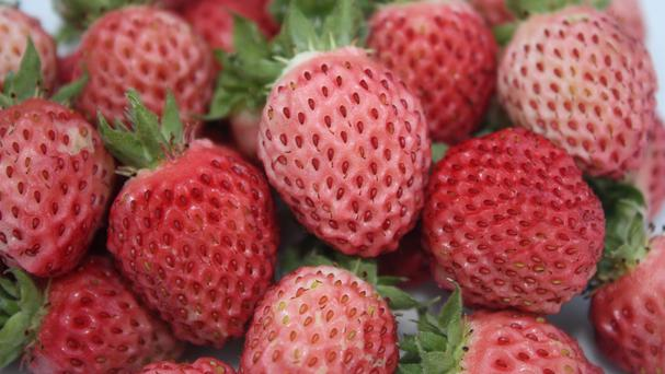 Waitrose is selling bubbleberries, a new fruit resembling a small strawberry but tasting like bubblegum