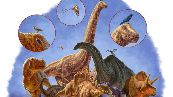 A depiction of dinosaur body size evolution and shape over 170 million years