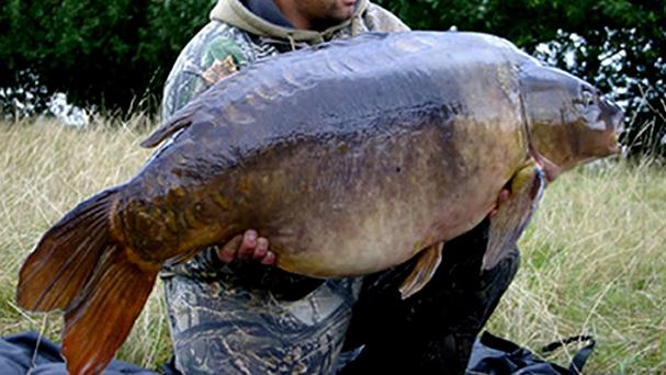 The carp was spotted in ankle-deep water after heavy rain