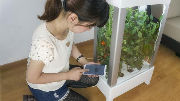 A girl uses the world's first app-controlled greenhouse, allowing city dwellers to grow food in tiny space (Niwa/PA).