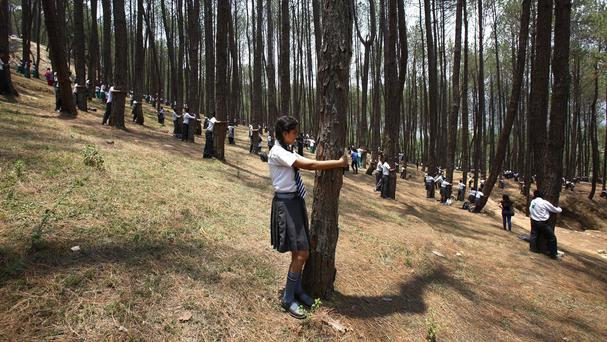 More than 2,000 people gathered in Nepal in a bid to set a world record for the largest tree hug on World Environment Day (AP)