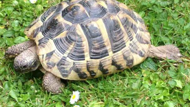 A tortoise was saved from certain death after it travelled nearly 300 miles in the back of a lorry to a recycling plant in Norfolk (Mid Devon Council/PA)