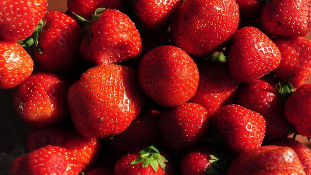 A new dog food recipe is made with fresh strawberries