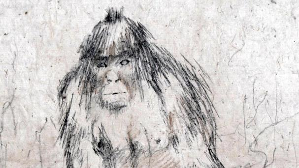 A drawing of a yeti based on alleged witness accounts of Himalayans