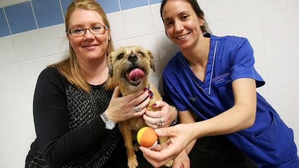 Border terrier Trixie with owner Melanie Pounder and PDSA vet Emma Holt with a ball similar to the one she had removed from her stomach (PDSA/PA)
