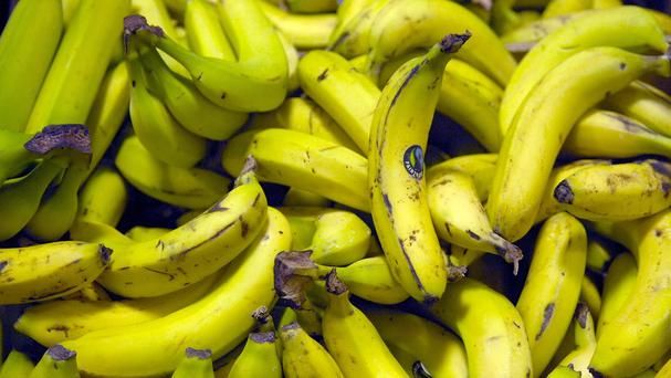 Panama disease hits banana plant roots, with Race 4 considered particularly destructive