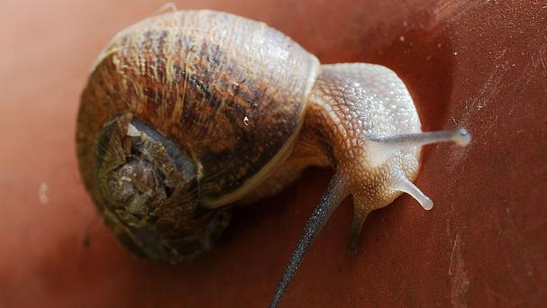 Giant snails were seized at Los Angeles airport