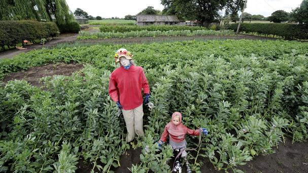 More than 1,000 scarecrows have already been brought along to the farm in Burton-on-Trent