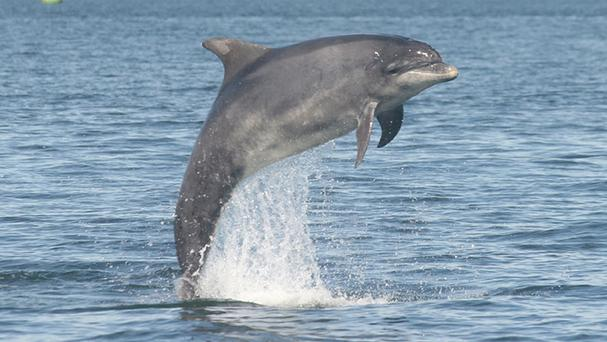 Experts say dolphins and whales 'squeal' with delight
