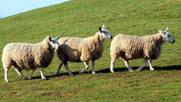 An estimated 400 farmers in the Cooley had to cull their flocks as a result of the 2001 disease
