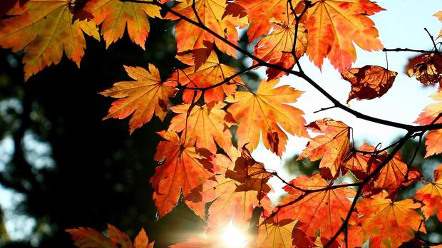 Parliamentary authorities have come under fire for removing autumn leaves by hand