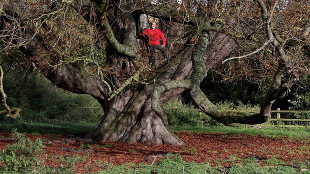 Hughenden Manor ranger Steve Kirkpatrick sits in the largest horse chestnut tree in the country at the estate, near High Wycombe, Buckinghamshire