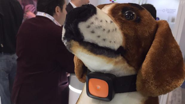 The Scout5000 smart dog collar on show at the Consumer Electronics Show in Las Vegas