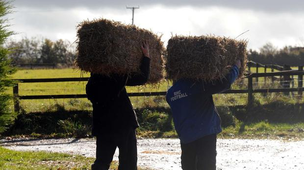 There is little chance for the straw to be baled