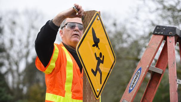 John Kleeman installs warning signs in an Oregon park where visitors were attacked by owls (AP/Statesman-Journal/Danielle Peterson)