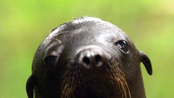 A sea lion pup hopped on a kayak for a 20-minute ride.