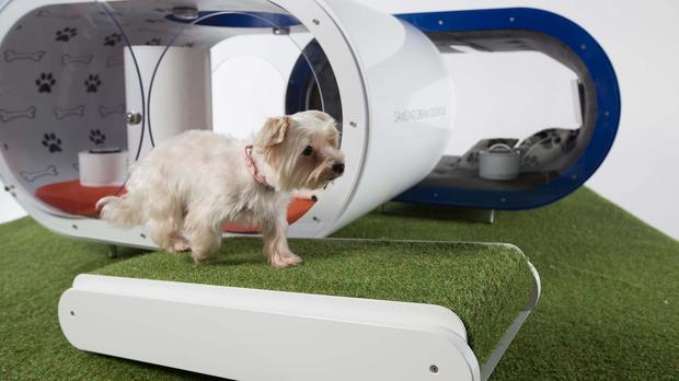 Gracie, a terrier cross, tries out the treadmill in the Samsung Dream Doghouse