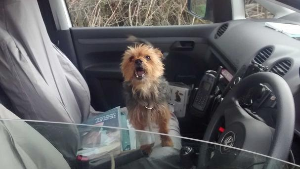 Alfie engineered a rescue by flagging down a passing RSPCA van more than 100 miles from his home (RSPCA/PA)