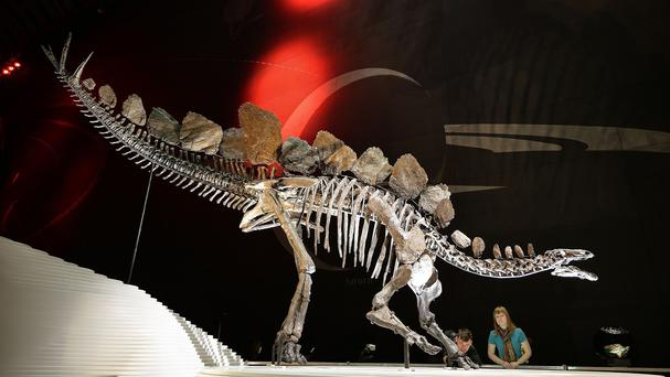 The Natural History Museum has a Stegosaurus fossil known as Sophie but its gender is unknown