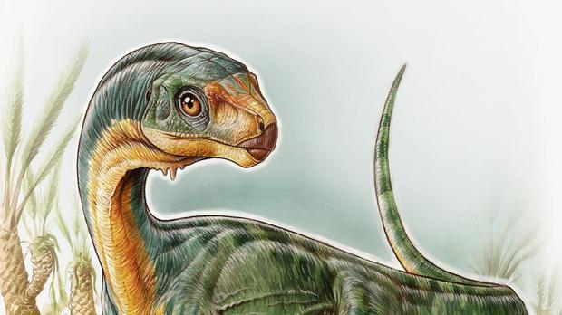A Chilesaurus diegosuarezi dinosaur from Chile, which belongs to a family including famous meat-eaters such as Jurassic Park movie star Velociraptor, Carnotaurus and T. rex (University of Birmingham/PA)