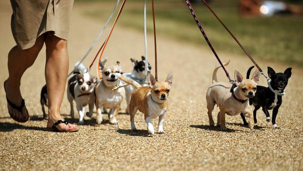 Real dogs are likely to become a luxury in an overpopulated world and should be replaced by virtual pets, an animal welfare expert has said