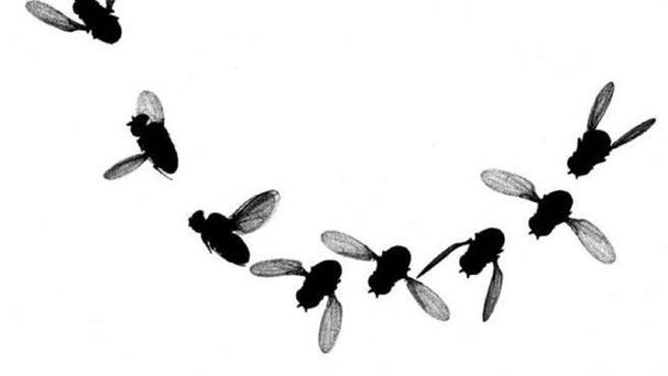 Research involving fruit flies points to the possible existence of inherited
