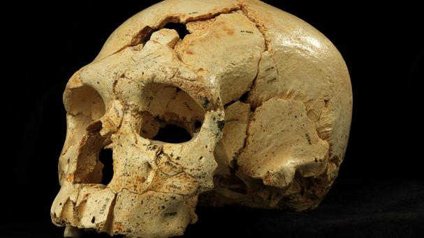 One of the ancient skulls from the Sima de los Huesos cave in northern Spain (Madrid Scientific Films)