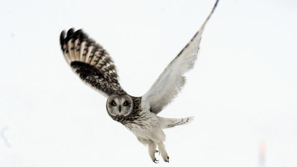 Scientists developed a 'quiet coating' after studying the feathers of owls