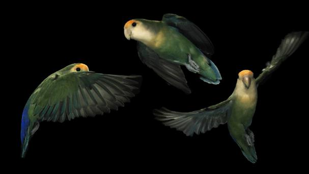 Lovebirds can rotate their heads at lightning-fast speeds, scientists have discovered (One Press/PA)